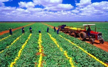 pawpaw farming in kenya pdf
